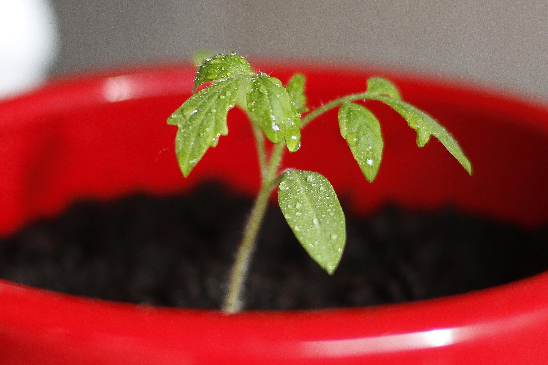 Wordt het al tijd jouw plantje te verpotten?